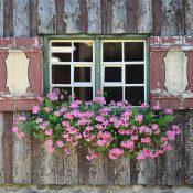 Które rolety mają najbardziej dekoracyjne walory?