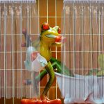 frogs-1517955_960_720